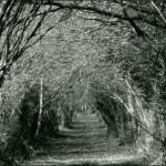 un_chemin_du_bocage_de_la_zad