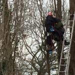 treerisingup